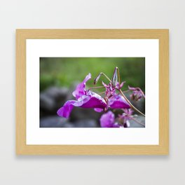 Indian Balsam Bokeh on the banks of the River Tay in Scotland Framed Art Print