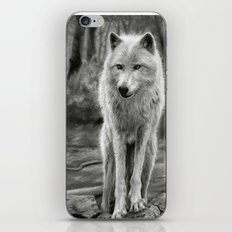 White Wolf in the Forest iPhone & iPod Skin