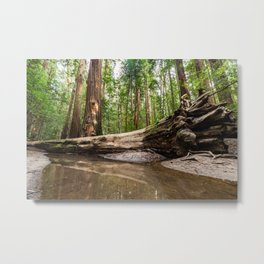 The Living and the Dead Metal Print