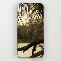 Great Blue Heron Portrait iPhone & iPod Skin