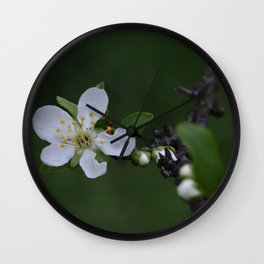 Plum tree flower Wall Clock