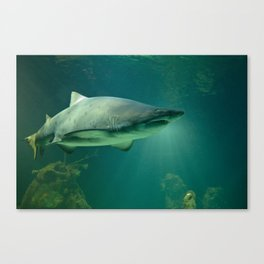Shark Canvas Print