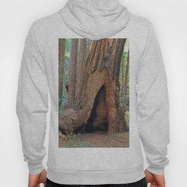 Muir Redwood II Hoody