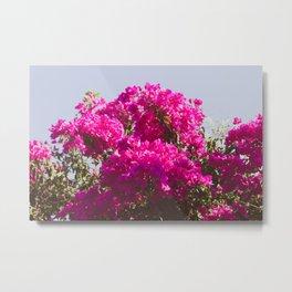 Pink Flowers in Bloom Metal Print