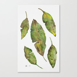 Green Autumn Leaves, Watercolor Painting by Stephanie Kilgast Canvas Print