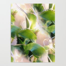 Bamboo Lights Poster