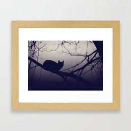 Mistery cat perching on tree in misty night Framed Art Print