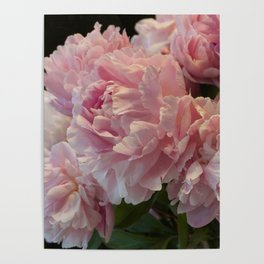 Pink Peony Passion Poster