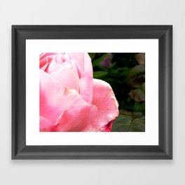 rose 4 u Framed Art Print