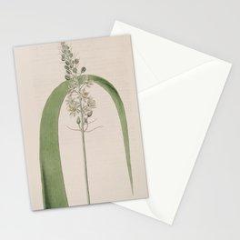 Flower 814 ornithogalum virens Green Ornithogalum13 Stationery Cards