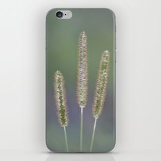 The charités iPhone & iPod Skin