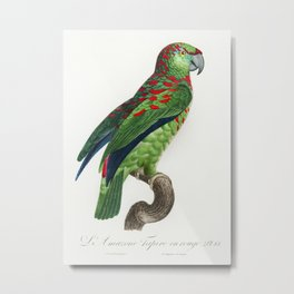 The Turquoise-Fronted Amazon (Amazona aestiva) from Natural History of Parrots (1801—1805) by Franco Metal Print