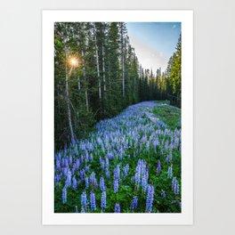 High Country Lupine - Purple Wildflowers in Montana Mountains Art Print