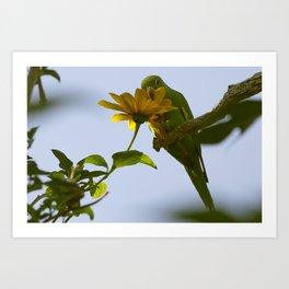 Birds from Pantanal Periquito-de-encontro-amarelo Art Print