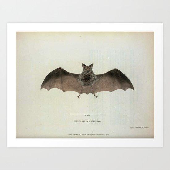 Vintage Bat Art Print