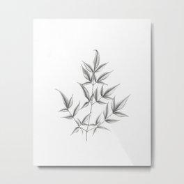 Nandina domestica Metal Print