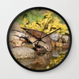 Young female goldfinch drinks water in hot summer day Wall Clock