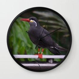 National Aviary - Pittsburgh - Inca Tern 1 Wall Clock