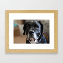 Sad Ears Framed Art Print
