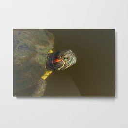 Turtle swimming in a lake Metal Print