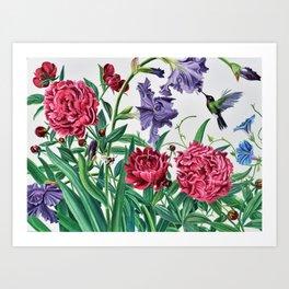 Iris and peonies Art Print