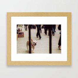 Dog Walking Framed Art Print