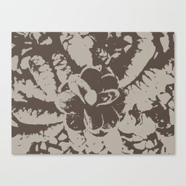 Brown pine cones Canvas Print