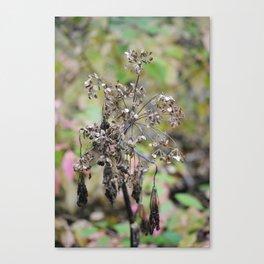 Dead Summer Plant Canvas Print