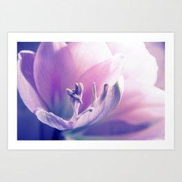 Soft beauty amarillys Art Print