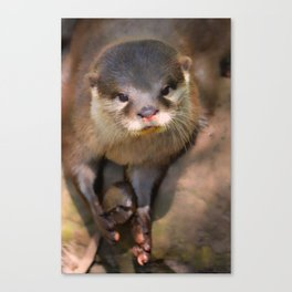 Crossed Eyed Otter Canvas Print