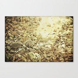 oilk Canvas Print