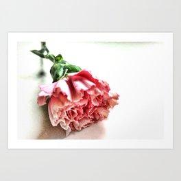 A Single Carnation Art Print