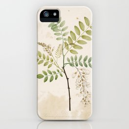 Black Locust Botanical Illustration iPhone Case