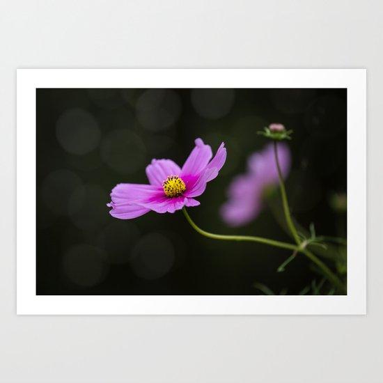 pink Cosmea summer flower Art Print
