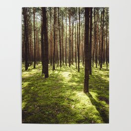 FOREST - Landscape and Nature Photography Poster