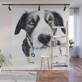 Kelpie Dog Wall Mural