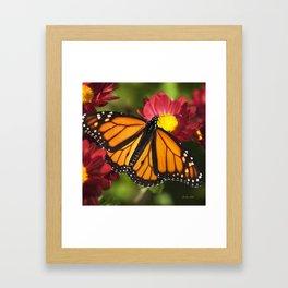 Monarch Butterfly Framed Art Print