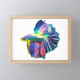 Rainbow Betta Fish Framed Mini Art Print