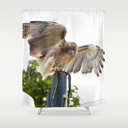 Red Tailed Hawk with Snake Shower Curtain