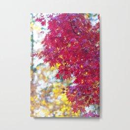Maple in the Fall Metal Print
