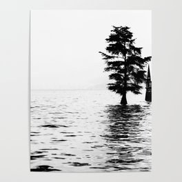 Fir in the water Poster