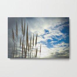 Coronado California Seagrass Metal Print