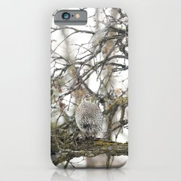 Sharp-Tailed Grouse 3 iPhone Case