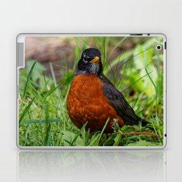 A Curious American Robin Laptop & iPad Skin