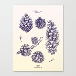 Pine Cones - version 2 Canvas Print