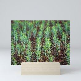 Growing thuja from seed Mini Art Print
