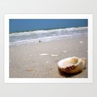One brave little shell. Art Print