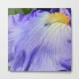 Blue Violet Iris Petal Close up Metal Print