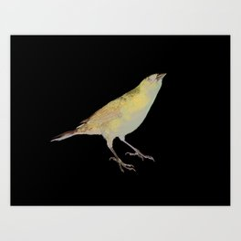 shiny cowbird Art Print