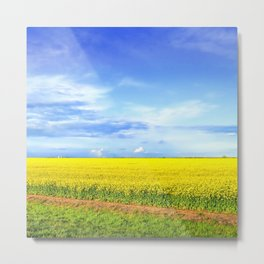 Yellow Canola Field In Bloom photography Metal Print
